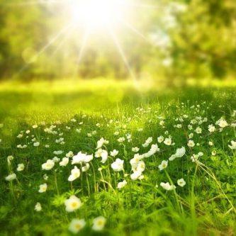 Mindfulness, atención a la respieración